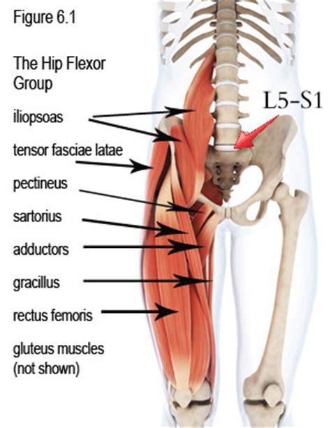 hip flexor muscles diagram www pixshark com images