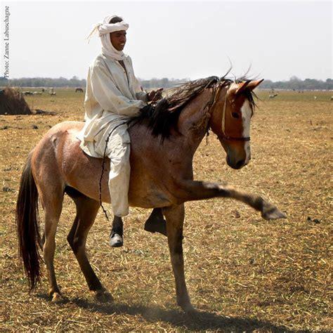 horse nomads nomad african africa power stallion zakouma rangers ranger chad poaching patrols magazine patrol