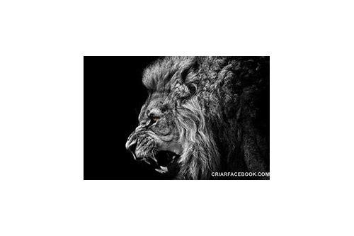baixar de videos de caçadores ao leão