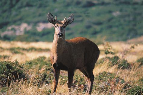 patagonian wildlife latin routes