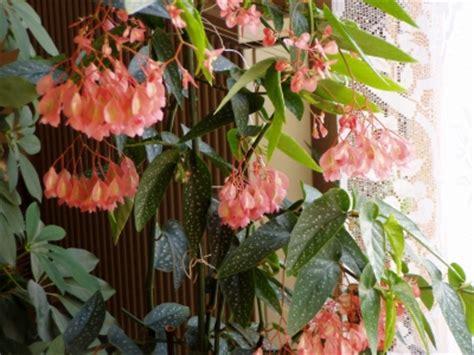 fleur interieur photo de fleur une pensee fleuriste