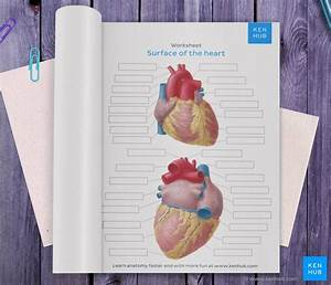Diagrams  Quizzes And Worksheets Of The Heart