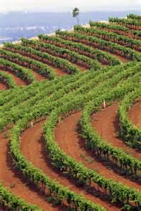 Australia Vineyards