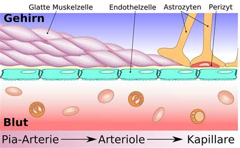Gliale Blut-hirn-schranke