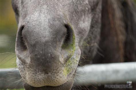 der geheimtipp hausmittel gegen pilzbefall beim pferd