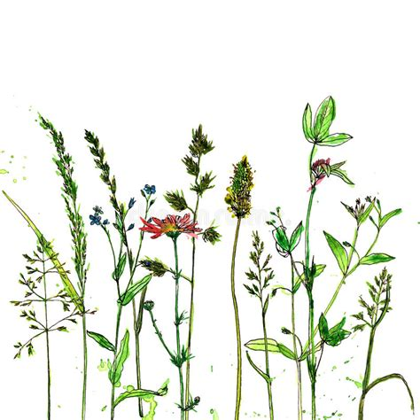 Watercolor Ink Drawing Plants Stock Illustration