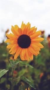 sunflower background | Tumblr