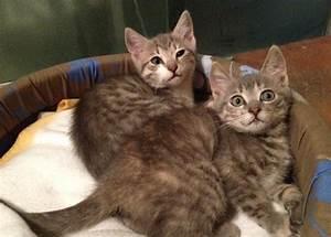 Due gattini buttati nel cassonetto (e salvati) CorriereFiorentino