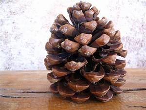 Pom De Pin Sallanches : divines pignes pommes de pins la cachina ~ Premium-room.com Idées de Décoration