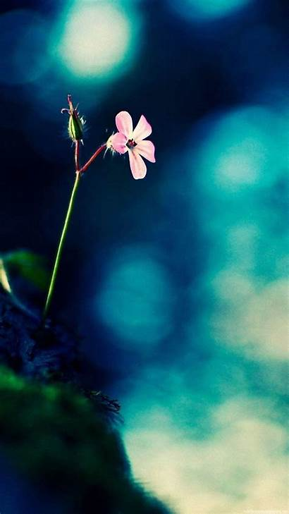 Wallpapers Mobile Screen Vertical Android 1080p Flower