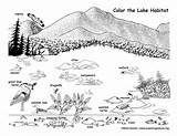Coloring Lake Habitat Wildlife Nature Sponsors Wonderful Support Please sketch template
