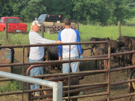 bull cut leachman bulls beef making