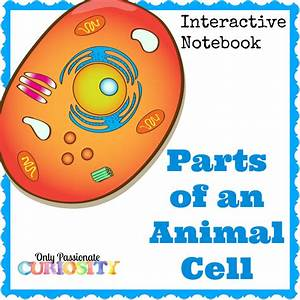 Animal Cell Interactive Notebook