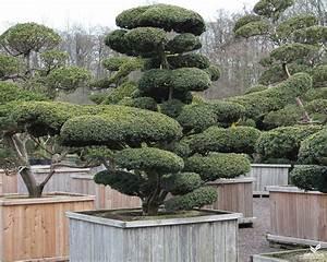 japanische pflanzen biorhythmuskalender With französischer balkon mit garten bonsai winterhart