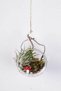 Tillandsien Im Glas : glas kugel mit tillandsien zum aufh ngen von geschenke werkstatt auf geschenke ~ Eleganceandgraceweddings.com Haus und Dekorationen