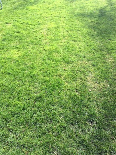 Rasen Vertikutieren Sommer by Wann Rasen Richtig Vertikutieren Anleitung F 252 R Hobby