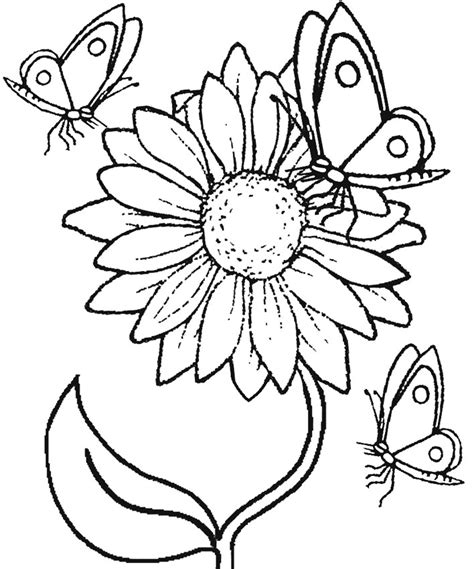 gambar bunga diwarnai anak sd