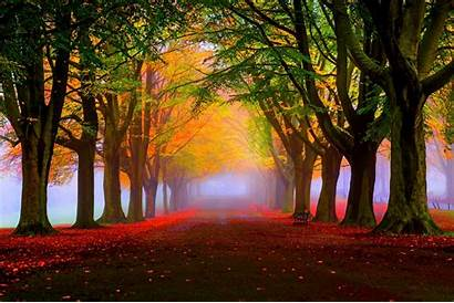 Trees Autumn 4k Park Fall Leaves Fog