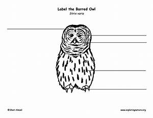Owl  Barred  Labeling Page