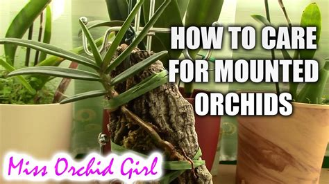 How To Care For Mounted Orchids Youtube