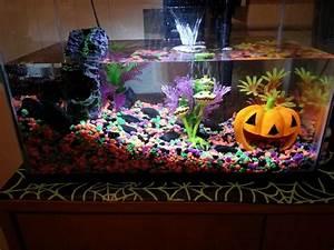 best 25 axolotl tank ideas on pinterest fish tank fish With decorative fish tank ideas things to consider