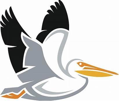 Pelican Vector Pelicans Illustrations Clip Clipart Vectors