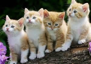 pet cat a new breed of pet shop in perth