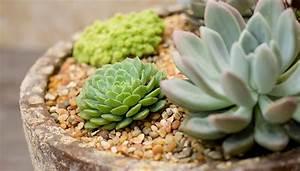 Plant A Succulent Bowl