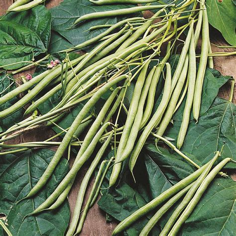 French Bean (climbing) Isabel Seeds  Peas And Beans From
