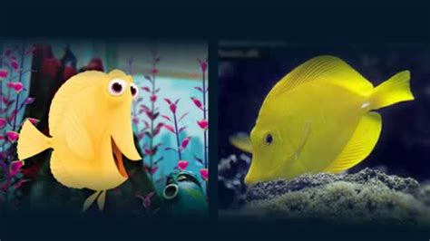 nemo fish tank seahorse aquariums