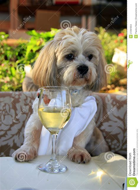 gourmet dog  white wine stock photo image