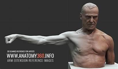 Anatomy Arm 360 Extension Reference Info Anatomy360
