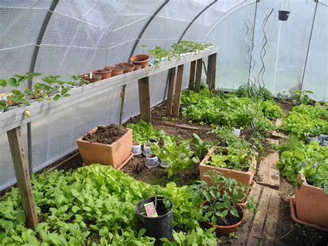 semer persil en pot pourquoi semer sous serre ou sous abri jardiner avec jean paul
