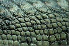 texture pattern images   groomsmen