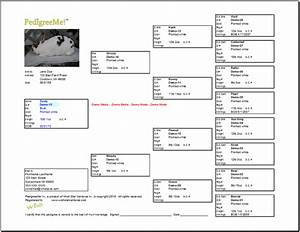 25 images of rabbit pedigree template excel infovianet With rabbit pedigree template