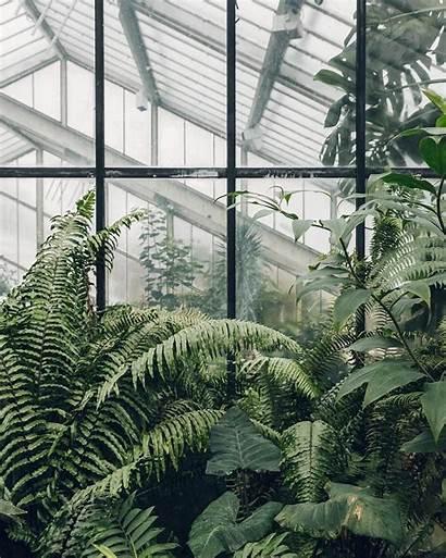 Aesthetic Wallpapers Pc Plant Backgrounds Wallpapersafari