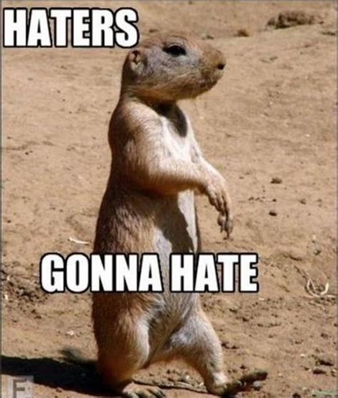 Haters Memes - epic haters gonna hate memes 39 pics 1 video izismile com