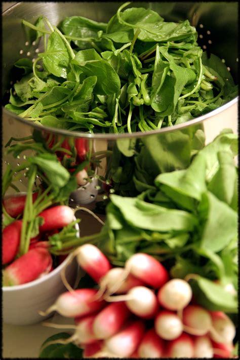 cuisiner les feuilles de radis mobilier table cuisiner fanes de radis