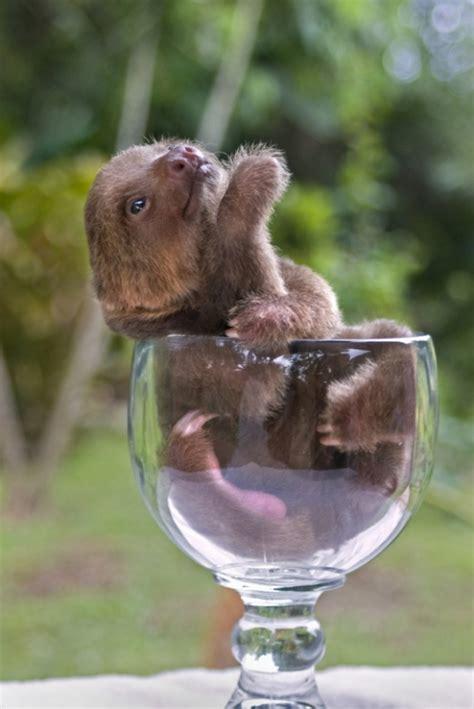 Cutest Otters | Wohnideen und Einrichtungsideen