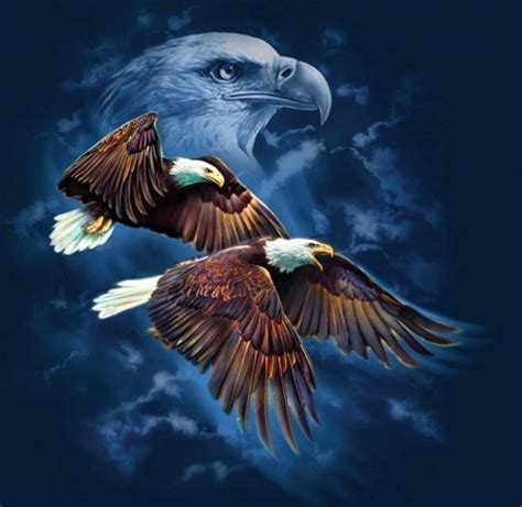 Spirit Animal Wallpaper - eagle spirit birds animals background wallpapers on