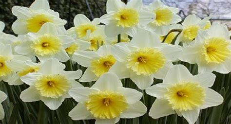 Consoli Narciso by Mitologicamente Narciso Parole Di Burro Ripost