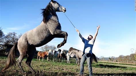 telepathic cnn stunts incredible horse horseman horses