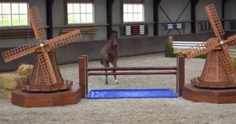 rider course horse jumps independent strong without perfect