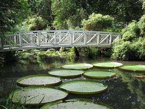 17 best images about gardensbeautiful gardensall for Gainesville botanical gardens