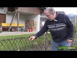 Wann Apfelbäume Schneiden : gartentipp apfelbaum schneiden doovi ~ Lizthompson.info Haus und Dekorationen