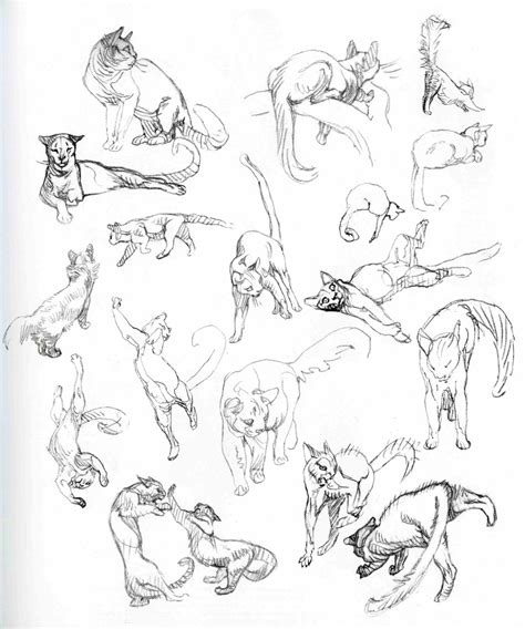 character  creature design notes claire wendlings cats