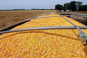 Can the Corn Market tailwinds continue? | Corn and Soybean ...