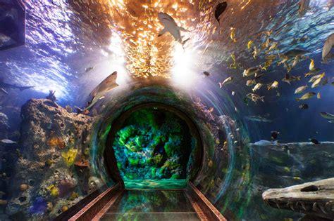 Sea Life Aquarium – Grapevine Texas Online