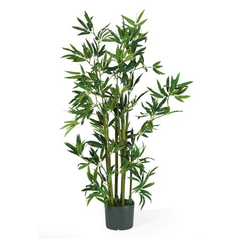 bamboo plants 4 foot bamboo plant potted 5040