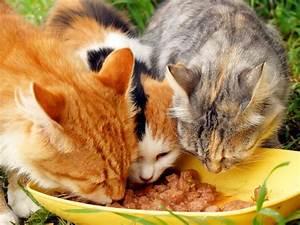 Futter Für Wildvögel Selber Machen : die besten 25 katzenfutter ideen auf pinterest ~ Michelbontemps.com Haus und Dekorationen